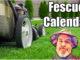 fescue lawn calendar
