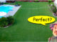 Perfect Green lawn
