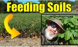 feeding soil lawn and garden