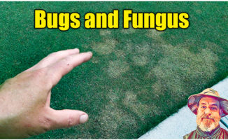 lawn fungus lawn insects
