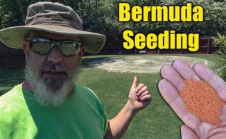 seeding bermuda lawn