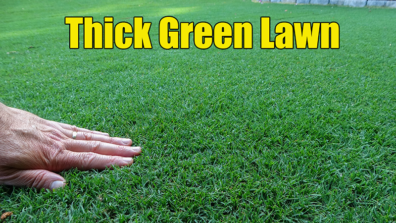 How to get a thick green lawn.