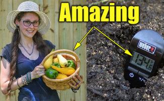 vegetable garden organic soil