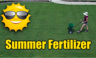 summer lawn fertilizer