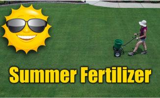 summer lawn fertilizer