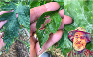 vegetable garden disease insects