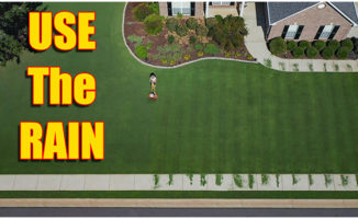 heavy rain lawn care