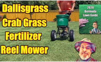 kill dallisgrass bermuda lawn