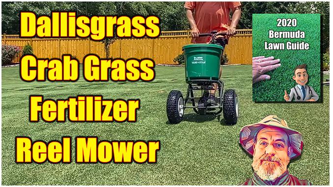 kill dallisgrass bermuda lawn