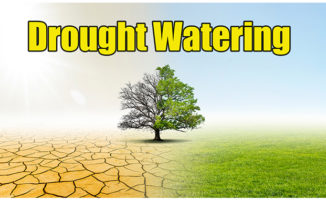 lawn drought watering