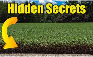 lawn soil test online