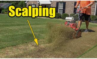 bermuda lawn scalping