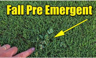 fall pre emergent