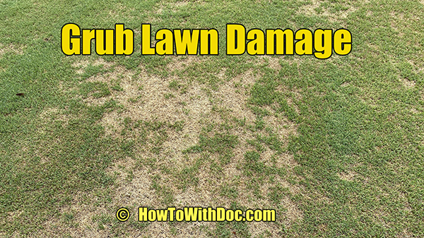 grub lawn damage