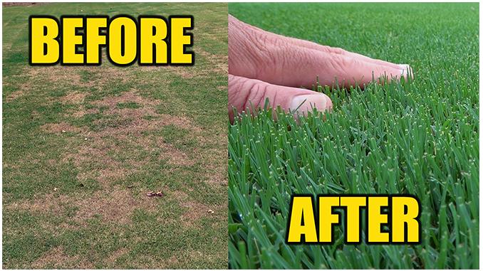 lawn repair grub damage