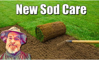 new sod lawn care