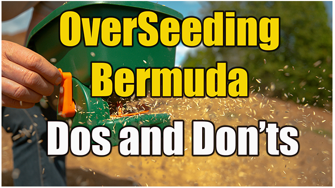 overseeding bermuda with rye