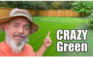 crazy green fall lawn