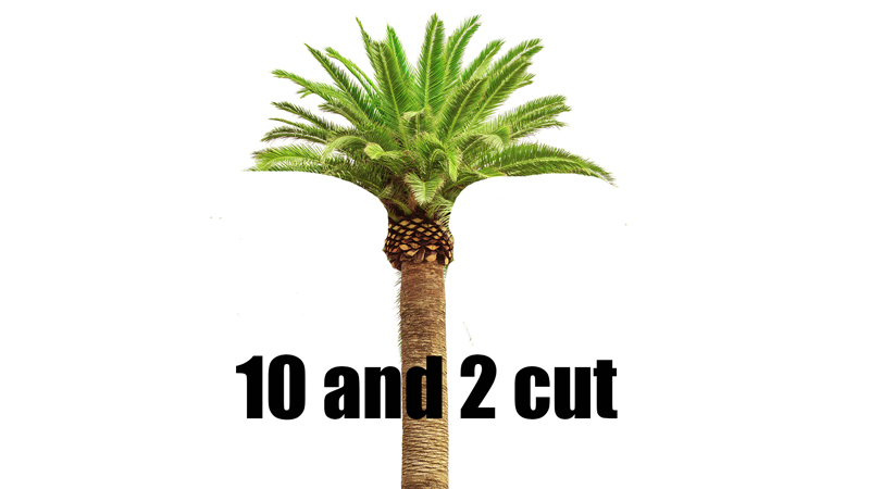 10 to 2 palm tree cut