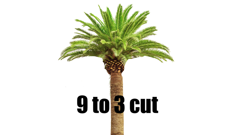 9 to 3 palm cut