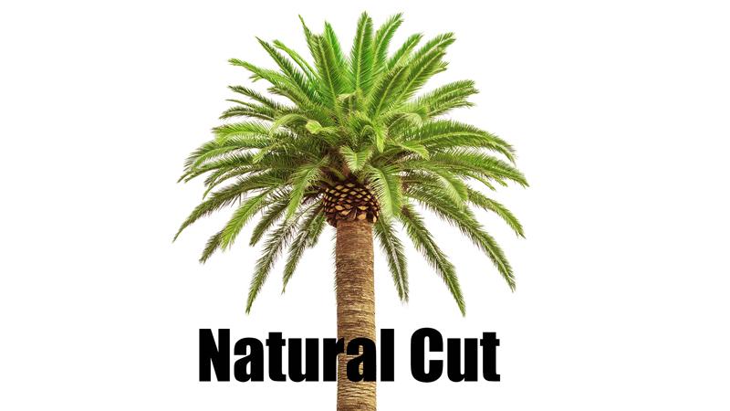 natural palm tree cut