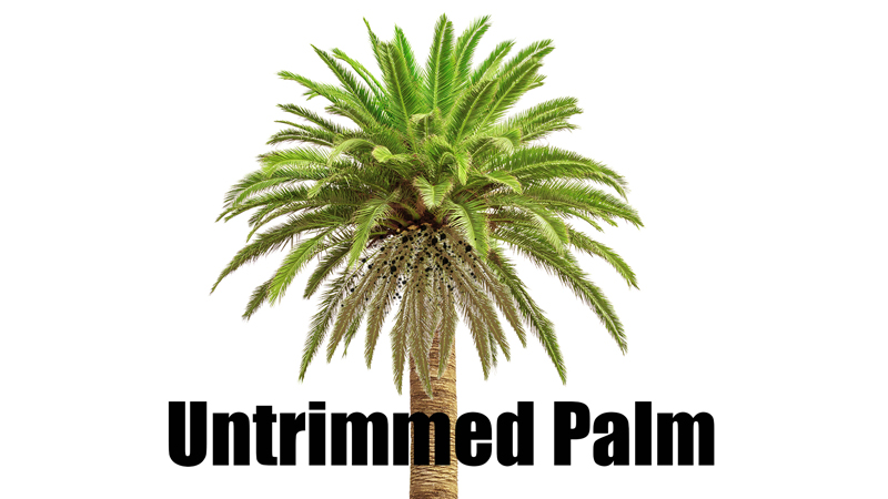 untrimmed palm tree