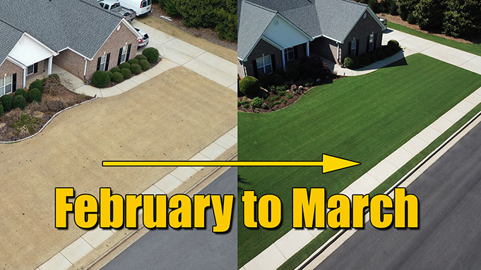 Early Spring Lawn Care - Warm Season Grasses
