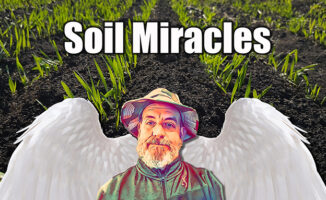 soil microbes and carbon