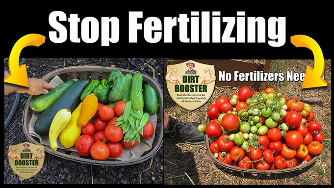 Best natural and organic vegetable garden fertilizer
