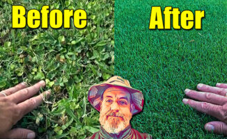 fix ugly lawn first fertilizer