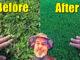 fix ugly lawn first fertilizer