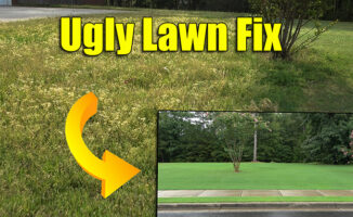fix ugly lawn full of weeds