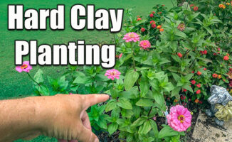 planting flowers and plants in hard clay soils