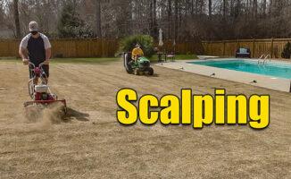 scalping bermuda lawn
