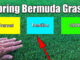 spring bermuda grass stages