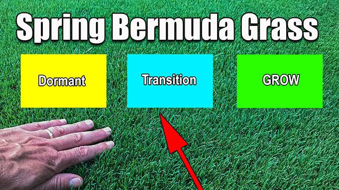 spring bermuda grass stages