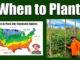 when to plant vegetable garden