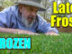 late frost lawn garden care