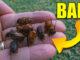 lawn beetles and grubs