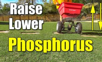 raise lawn phosphorous