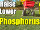 raise lawn phosphorous