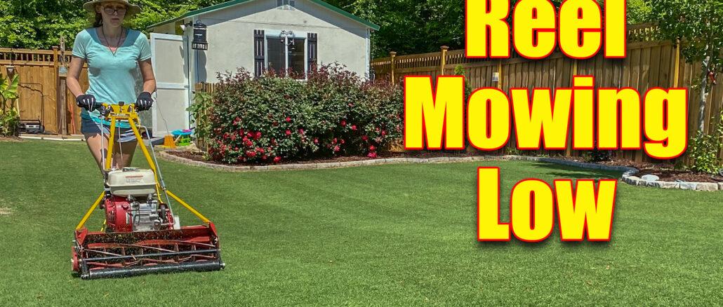 reel mowing lawn low