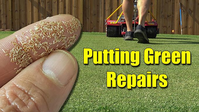 seeding putting green