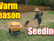 seeding warm season grasses