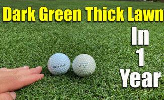 dark green thick lawn