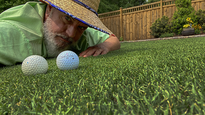 how to get a thick green lawn