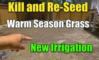 reseeding warm season grass