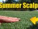 bermuda lawn scalp summer