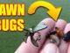 lawn bugs