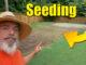 lawn seeding bermuda grass